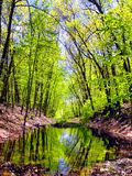 Hop brook dam state park in Naugatuck. A tree covered flooded hiking trail within hop brook state park in Naugatuck Connecticut royalty free stock photos