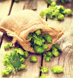 Hop in burlap bag on cracked wooden background. Brewing concept royalty free stock photography