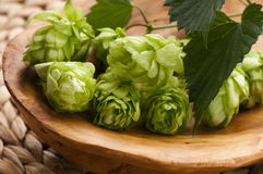 Hop cone and leaves Royalty Free Stock Photography