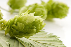 Hop cone and leaves Stock Photos