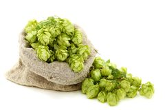Hop cones in a bag. Hop cones in a bag on a white background Royalty Free Stock Photos