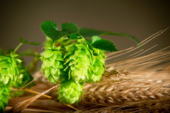 Hop Cones With Barley Royalty Free Stock Photo