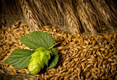 Hop Cones And Barley Stock Photography