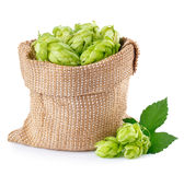 Hop cones in burlap bag  isolated on white Royalty Free Stock Images