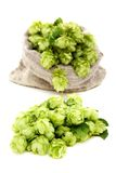 Hop cones closeup. Royalty Free Stock Image