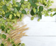 Hop cones and ears on a light background. Royalty Free Stock Photography