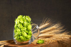 Hop cones in the glass of beer Royalty Free Stock Images