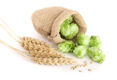 Hop Cones In Bag With Ears Of Wheat Isolated On White Background Close-up Stock Photos