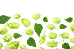 Hop cones isolated on white background. Beer brewing ingredients. Beer brewery concept. Beer background. Top view stock images