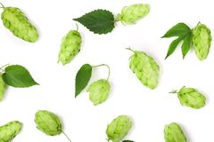Hop cones with leaf isolated on white background close-up. Top view royalty free stock photos