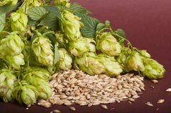 Hop cones and malt Royalty Free Stock Photography