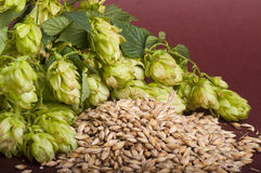 Hop cones and malt Royalty Free Stock Photos