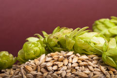 Hop cones and malt stock photography
