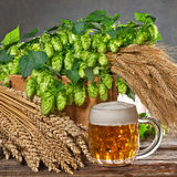 Hop cones and raw material for beer production Stock Image
