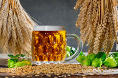 Hop cones and raw material for beer production Stock Images