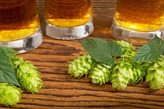 Hop Cones Stock Images