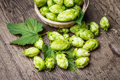 Hop cones Royalty Free Stock Images