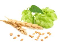Hop cones and wheat ears isolated on white background. Beer brewing ingredients. Beer brewery concept. Beer background stock photos