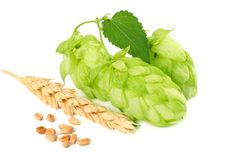 Hop cones and wheat ears isolated on white background. Beer brewing ingredients. Beer brewery concept. Beer background. royalty free stock image