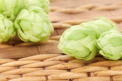 Hop cones on wicker basket background. Royalty Free Stock Image