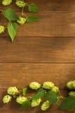 Hop cones on wood. En background Royalty Free Stock Photos