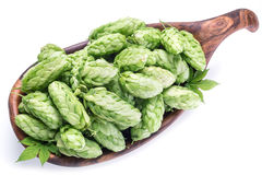 Hop cones in the wooden bowl. Royalty Free Stock Photography