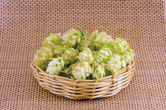 Hop cones in wooden plate Royalty Free Stock Photography
