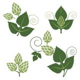 Hop design elements Royalty Free Stock Photo