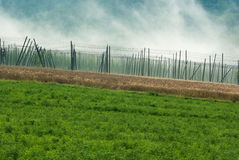 Hop field Royalty Free Stock Photo