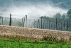 Hop field in fog Stock Image