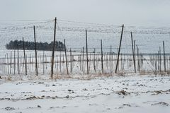 Free Hop Field Production Farm Plantation Beer Grower Support Winter Snow Stock Photos - 116072943