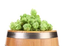 Hop flowers on a barrel. Royalty Free Stock Image
