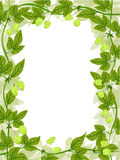 Hop frame pattern Stock Images