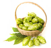 Hop Royalty Free Stock Photography