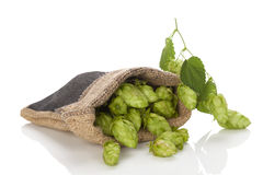 Hop fruit in burlap bag. Hop fruit in burlap bag on white background stock photo