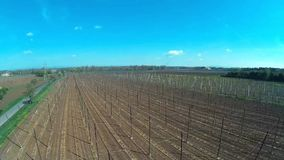 Hop garden in spring,Czech republic stock video