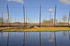 Hop gardens in Poland Royalty Free Stock Image