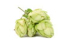 Hop gentle flowers. Stock Images