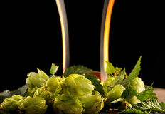 Hop and the glass of beer Stock Photography