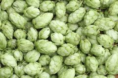 Hop green background Royalty Free Stock Image