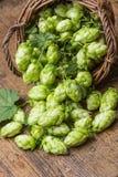 Hop Stock Photo