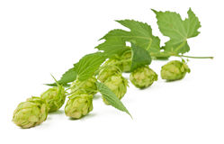 Hop isolated Royalty Free Stock Photos