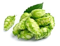 Hop isolated Royalty Free Stock Images