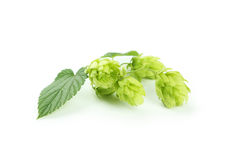 Hop isolated on a white Royalty Free Stock Photography