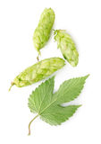 Hop and leaf Royalty Free Stock Images
