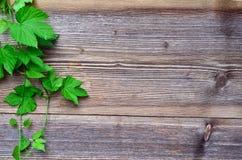 Hop leaf wooden background Stock Photography