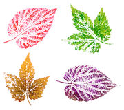 Hop leaves, painting Royalty Free Stock Photo