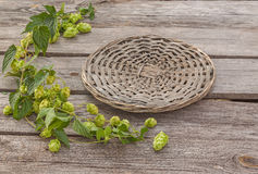 Hop on old wooden background stock photo
