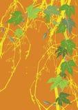Hop op grungeachtergrond Stock Afbeeldingen