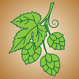 Hop Ornament. On Green Background, Vector Illustration Stock Photo